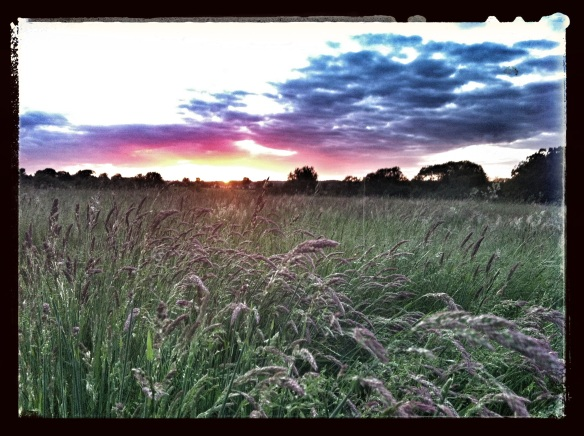 grass sunset