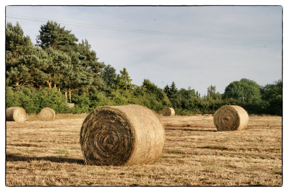 Harvest - haystack