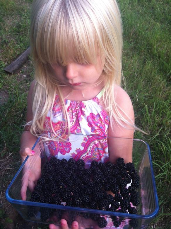 saffie blackberries