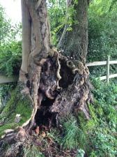 Acorn fairy enchanted tree